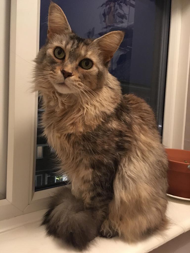 April Cats screenshot - Hazel aka Famous Paws
