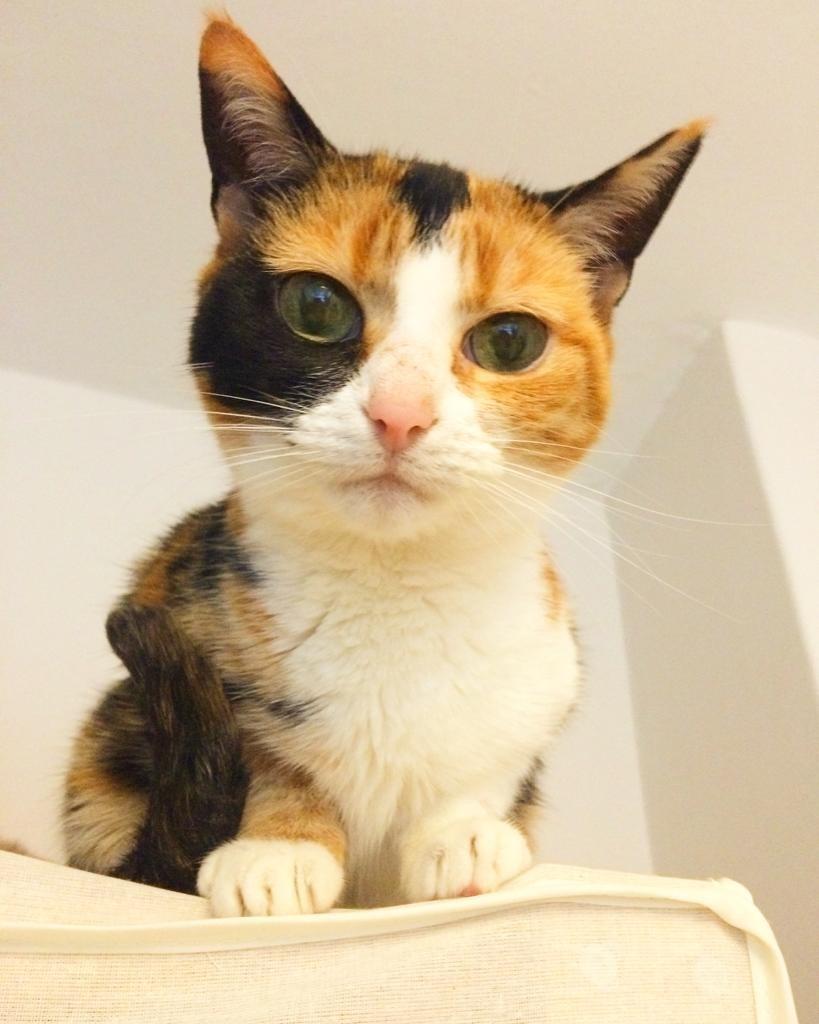 April Cats screenshot - Honey aka Magical Forever Space Kitten