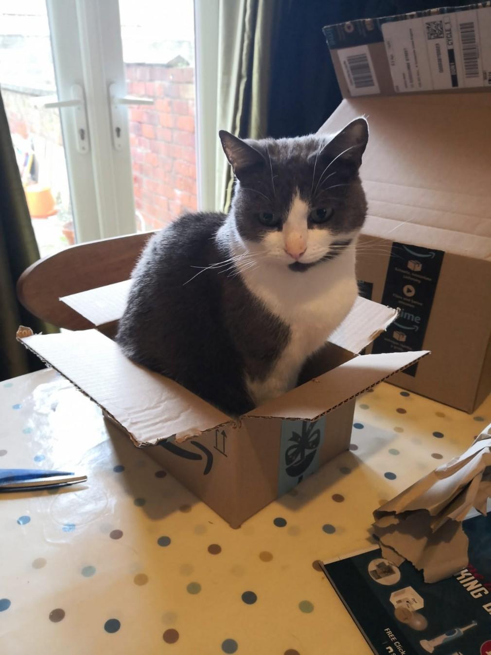 April Cats screenshot - Maisie aka Box Troll