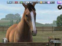 416Симулятор уход за лошадью