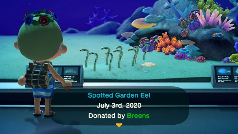 Full list of EVERY sea creature in Animal Crossing: New Horizons [UPDATED]
