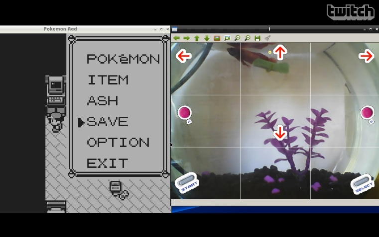 FishPlaysPokemon features a fish playing Pokemon livestreamed over Twitch